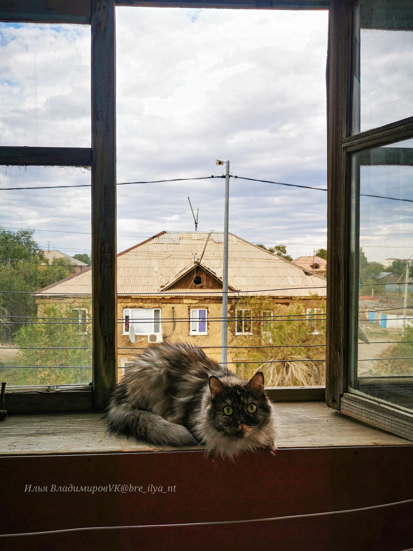 Нюша в Ебенях Карагандинской области - Фото
