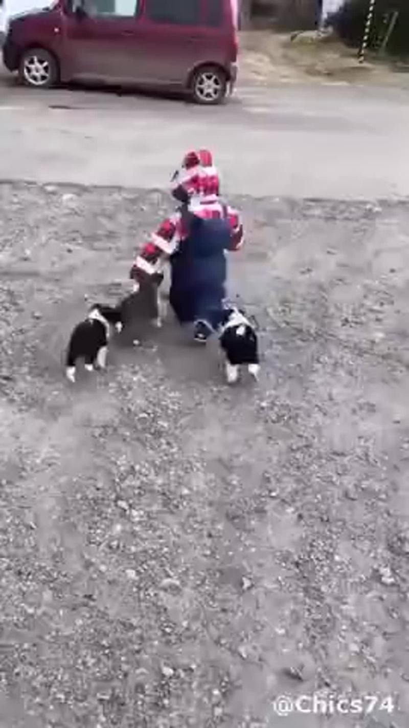 Стая собак напала на ребёнка (VHS Video)