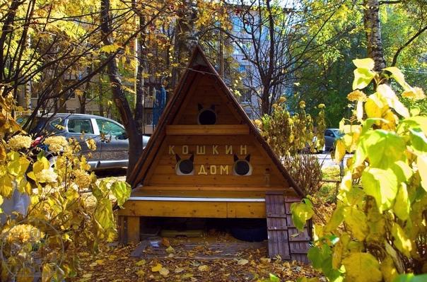 Котодом во дворе 31-го дома по улице Ушинского.Как...