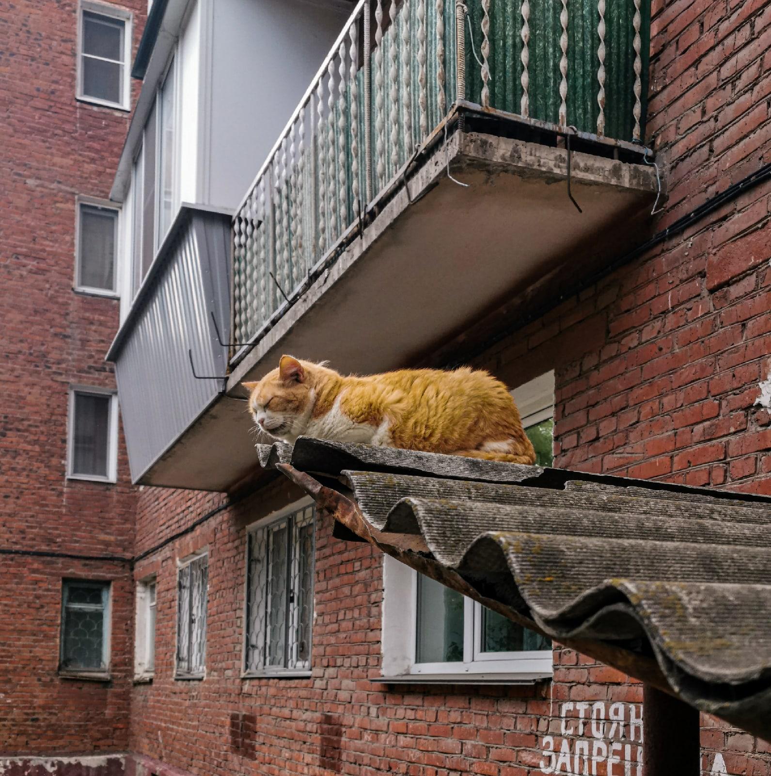 #?�отикиебеней Омск - Фото