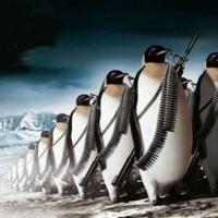 Пингвинов Пингвинов